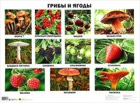 Грибы и ягоды. Плакат,