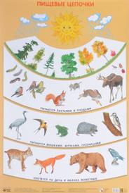 Пищевые цепочки. Плакат, С. Н. Николаева