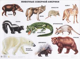 Животные Северной Америки. Плакат,