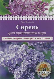 Сирень для прекрасного сада, Анна Белякова