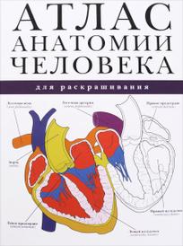 Атлас анатомии человека для раскрашивания,