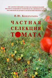 Частная селекция томата. Детерминантные формы томата для открытого грунт, И. Ю. Кондратьева