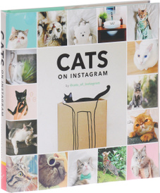 Cats on Instagram,