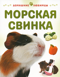 Морская свинка, Мэтью Рейнер