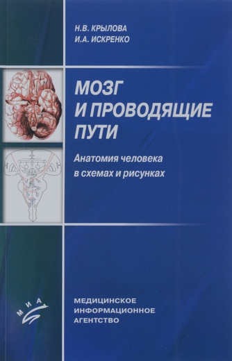 Мозг и проводящие пути. Анатомия человека в схемах и рисунках. Учебное пособие