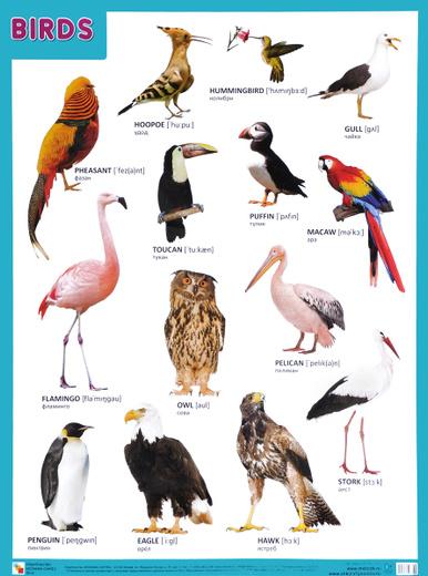 Birds / Птицы. Плакат