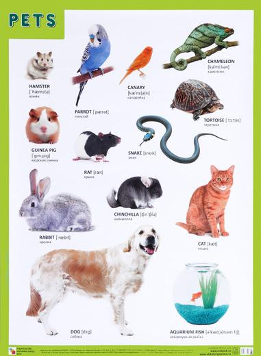 Pets / Домашние питомцы. Плакат