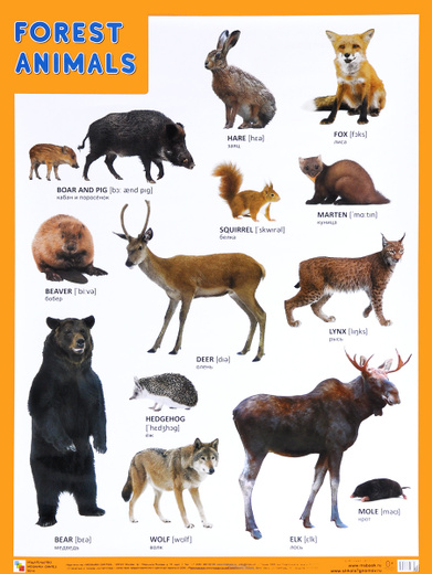 Forest Animals / Лесные обитатели. Плакат