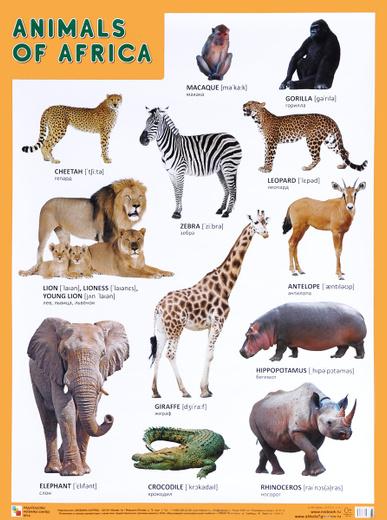 Animals of Africa / Животные Африки. Плакат