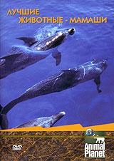 Animal Planet. Лучшие животные-мамаши pritish nandy communications