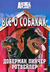 Все о собаках: Доберман пинчер, ротвейлер святитель феофан затворник о воспитании детей