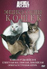 Энциклопедия кошек: Кошка породы мейн кун, египетская мау, сиамская, гималайская, ориентал и турецкая ангора